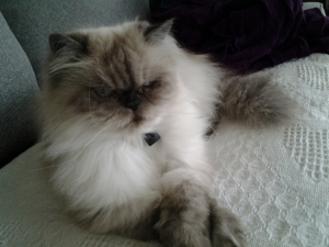 Mischka, the beautiful