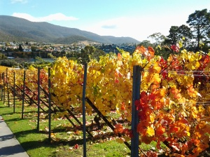 Vineyards at MONA